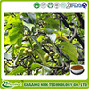 Prunus African Extract,Pygeum Extract,Prunus African Extract Powder