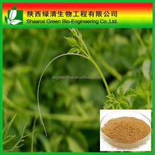 Gynostemma Pentaphyllum Extract 98% Gypenosides/regulate Cholesterol,Antioxidant,Benefit Digestion/Gynostemma Extract