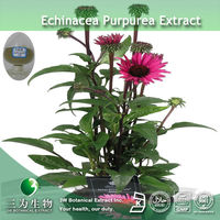 GMP Manufacturer Supply Echinacea purpurea Phenolic Compounds Extract In 3W