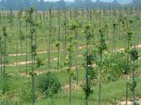 Tapered end fiberglass poles, fiberglass stakes, posts, frp stakes