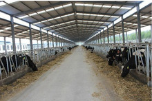 warm keeping prefabricated steel structure stables for cow