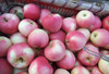 Shaanxi Hot Sale Fresh Delicious Apple Fruit in Competitive Price