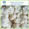Grade A Bulk Chinese Frozen Cauliflower