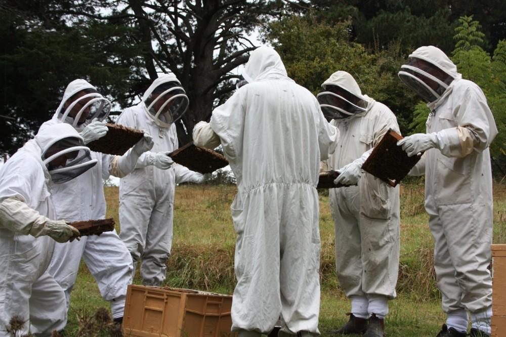 beekeeping suit 2