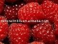 Raspberry extract 10:1