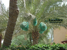 HDPE Monofilament Green Date Tree Bags
