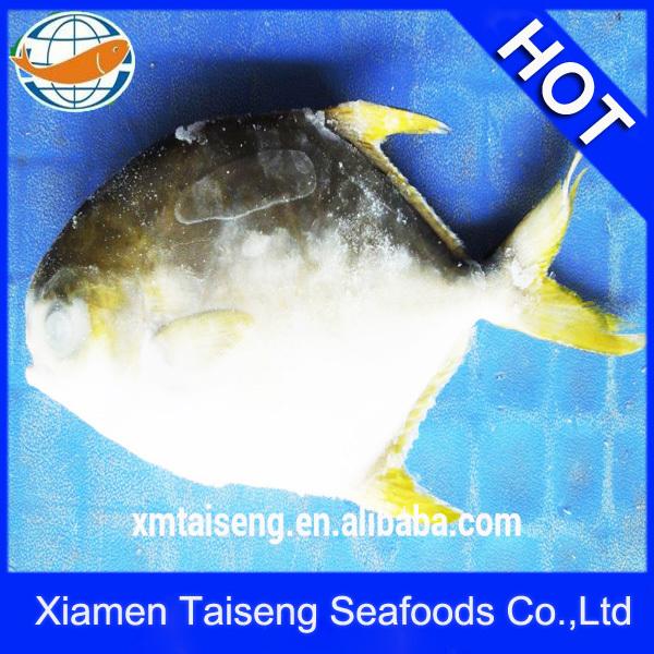 Comercio al por mayor mariscos congelado oro pompano/oro palometa