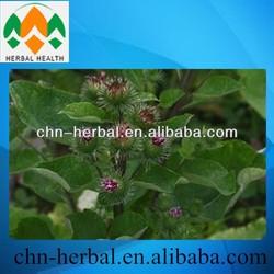 Arctium lappa extract, herb medicine, greater burdock powder