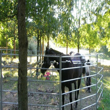 USA/Canada style livestock cattle/farm/ranch fence panel gates/6 rails horse fencing gate(China Factory&Suppier)