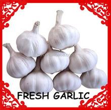 kosher fresh garlic