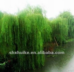 Manufacture supply white willow extract salicin