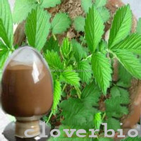 10:1 hot sale Hairyvein Agrimonia Herb Extract Herba Agrimoniae