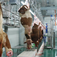 Slaughterhouse equipment for 50 cattles and 100 sheep per hour