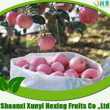China Shaanxi Fresh red Fuji Apple 2015 new crop to sell