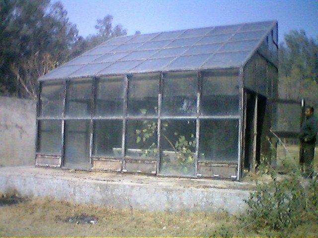Madeira solar , secador de