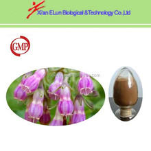 radix lithospermi Alkanna tinctoria extract 30% shikonin Shikone