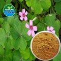 natural extracto de alfalfa de alta calidad de flavona