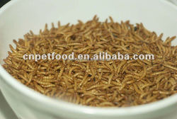 Tenebrio molitor dried mealworm Pet/Fish/Bird Food
