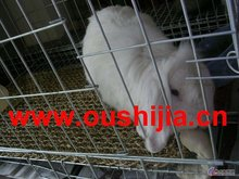 Rabbit Cages with high quality and low price ( manufacturer)