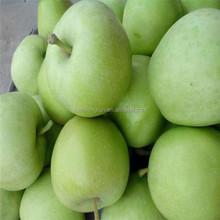Green Royal Gala Apple