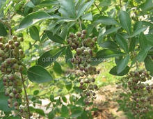 100% Natural 5% Vitexin Chasteberry Extract
