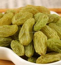 Chinese Xinjiang Organic Yellow raisin ,dried Yellow raisins prices
