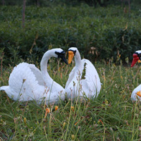 white flocked artificial swans