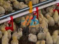 nipple drip cup of automatic poultry drinking system