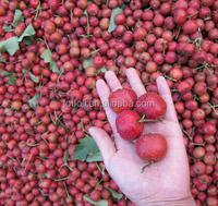 Fresh Hawthorn berry
