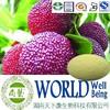 Hot sale Bayberry bark extract/Myricetin 98%/Bayberry powder/Detoxicating plant extract