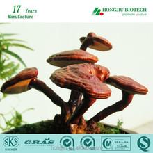 100% Pure Reishi Mushroom P.E.China Supplier Pharmaceutical Grade