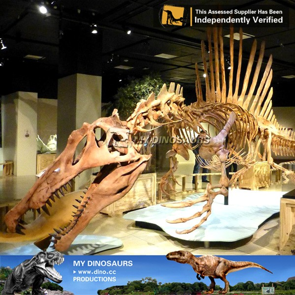 spinosaurus skeleton 1.jpg