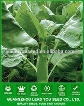 KL02 Cutiao fiore giallo verde semi broccoli cinesi, semi Kailan