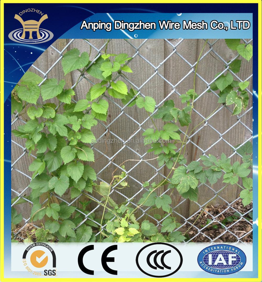 Piante e fiori arrampicata recinzione/giardino recinzione/rete ...
