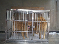 stainless steel dog cage, Wholesale stainless steel large steel dog cage