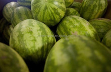 100% water soluble natural water melon powder