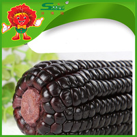Wholesale corn purple corn cob