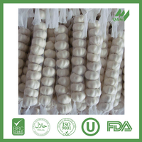 fresh super garlic manufacturer in 2015