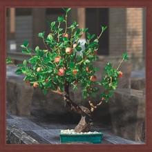 2014 Wholesale Artificial led apple/artificial plant/Artificial bonsai for decoration indoor