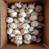 FRESH GARLIC /NATURAL GARLIC/CHINESE GARLIC