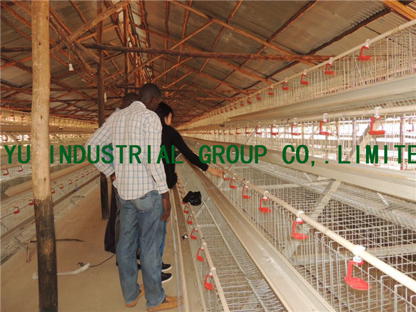 128 birds capacity design layer chicken house for kenya poultry farm
