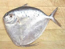 Moon Fish / Seafood / Vietnam seafood