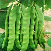 Yun dou zhong zi green bean seed for planting best bean seed