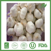 buy 2015 crop fresh chinese garlic