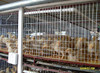 wire mesh dog cage/bird cage welded wire mesh/chicken coop wire