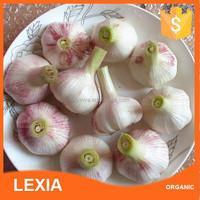Fresh Vegatables Fresh Garlic Specification