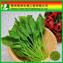 40-80mesh Freeze-dried Spinach Powder For Foods Material Fd Foods/spinach Leaves Powder/High Quality High Quality Spinach Powder