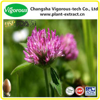 GMP Red Clover Extract Powder / P.E. for Antibiotic Use
