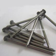 electro galvanized common wire nail/common iron wire nails/bright common nails factory