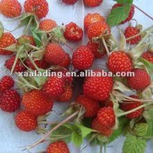 Ellagic Acid/raspberry ketone/raspberry seed extract